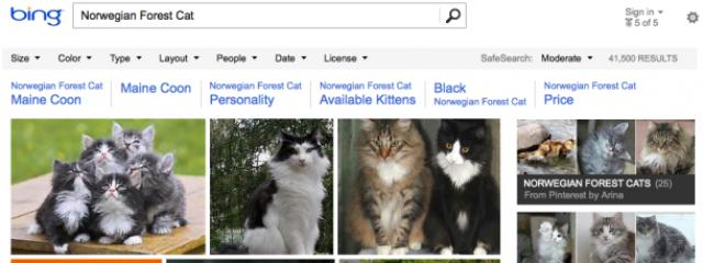 Картинки Pinterest добавлены в выдачу Bing