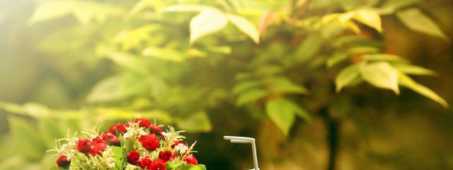 Поздравьте родных и близких эффектно вместе со службой доставки цветов